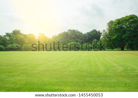 Blurred green lawn and sunlight