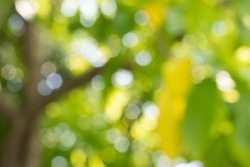 Blurred green leaves with bokeh abstract background