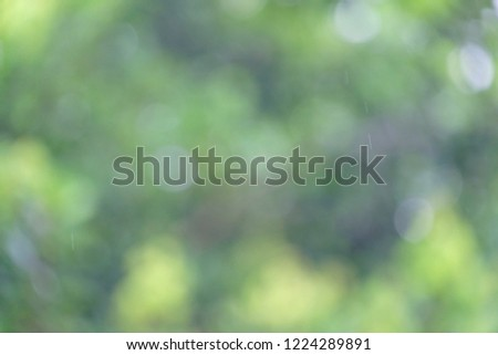 Blurred green leaves with day light and raindrops in rainy season for background texture