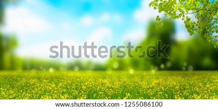 blurred idyllic landscape in springtime #1255086100