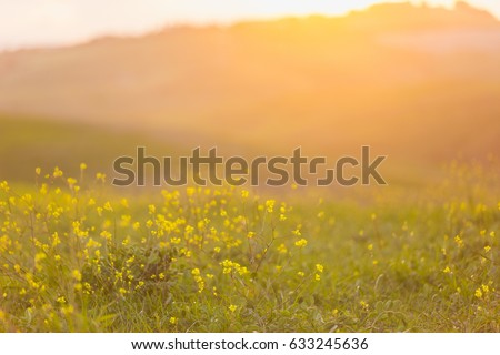 blurred image of a field with...