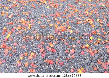 Blurred image of red and yellow leaves falling to the gray gravel ground, background image. #1286692666
