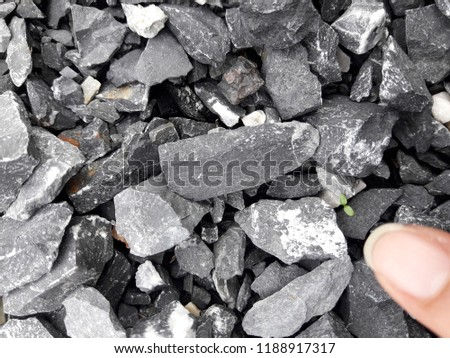 Blurred index finger pointing at little plant growing in pile of pebble. #1188917317