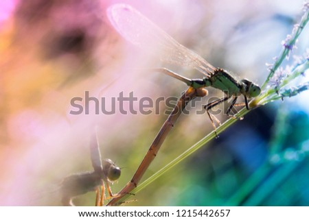 Blurred insect pairs with morning sunlight amidst green nature for background. #1215442657