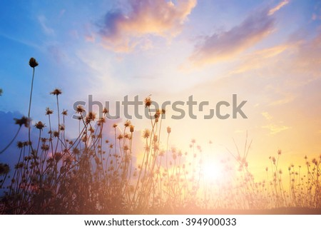 blurred meadow at sunset