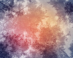 Blurred, mystical, natural background of pine trees. The pine forest is a view from below of the treetops and the sky with a dark, vintage treatment that gives an atmosphere of mysticism and unreality