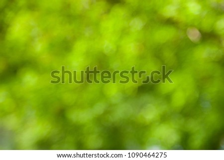 Blurred natural background. Spring forest.  #1090464275