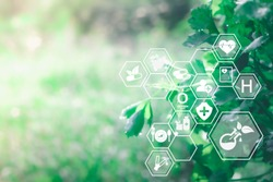 Blurred nature background with ai technology IOT. Herbal remedies. Nature sustainable energy logo. Agriculture, environmental and alternative medicine concept. Ecology reuse and data analysis report