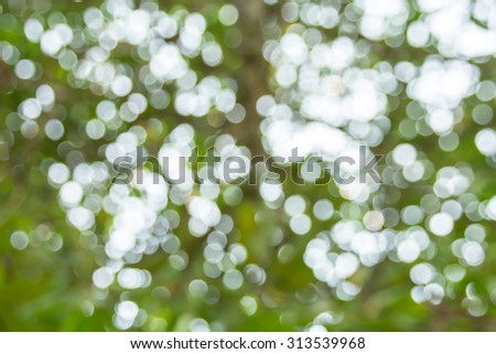 Blurred of nature outdoor  background