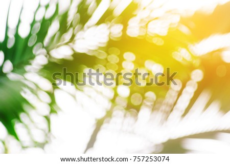blurred of tropical palm foliage with sunlight backgrounds #757253074