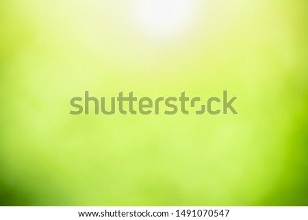 Blurred out focus of green nature leaf under sunlight. Use for wallaper or background.