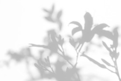Blurred overlay effect for for natural light photo effects. Gray shadows of the lily flowers on a white wall. Abstract neutral nature concept background. Space for text.