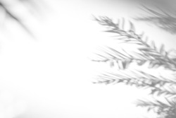 Blurred overlay effect for photo. Gray shadows of fir tree branches on a white wall. Abstract neutral nature concept background for design presentation. Shadows for natural light effects