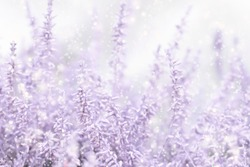 Blurred pastel winter floral background in lilac and white colors. Snowy frosty background with snowflakes and pink flowers.