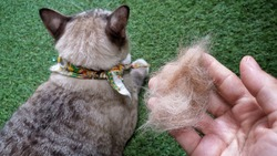 Blurred pet fur clump on human hand.