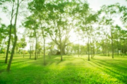 Blurred Photo Green Trees In The Morning Sun