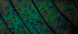 Blurred photos of the surface of the blue-green leaves.