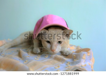 Blurred picture for orange tabby cat sleeping on old chair ,Cat wearing a hat