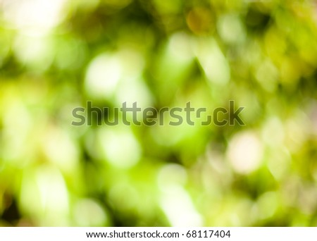 blurred plants background bokeh