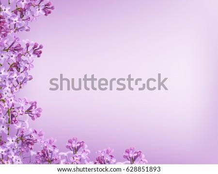 Blurred purple lilac background