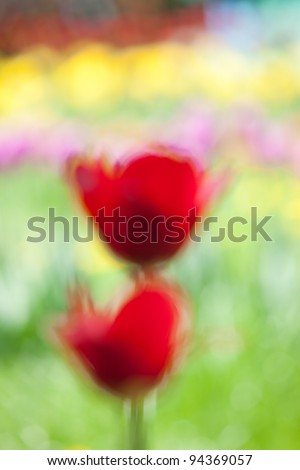 blurred red tulips, the imitation of Vincent van Gogh painting