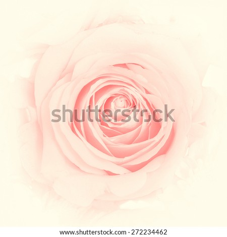 Blurred soft romantic pink rose in vintage style with vignette
