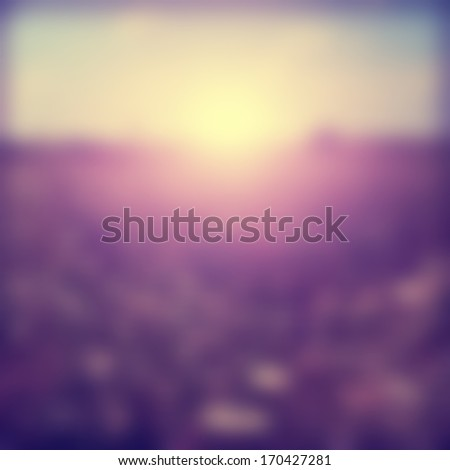 blurred summer field at sunset...