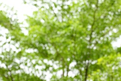 Blurred tree branch. Abstract spring background. Green natural background of out of focus forest or bokeh.
