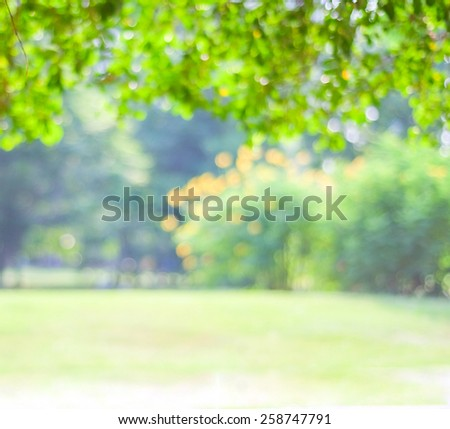 Blurred trees with bokeh in park background, spring summer season - Shutterstock ID 258747791