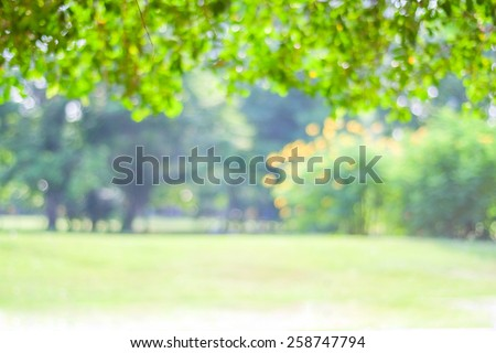 Blurred trees with bokeh in park background, spring summer season