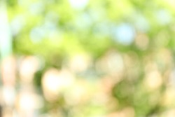 Blurred view of abstract green background. Bokeh effect