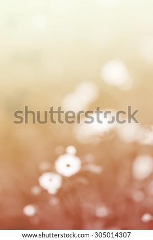 Blurred white daisy flower and grass vintage gradient sad valentine background