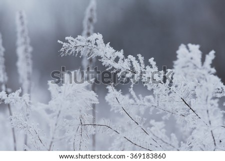 Blurred winter background, dry grass snowflakes #369183860