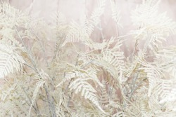 Blurred winter pale pink floral romantic background with fern leaves in natural trending style.  Light pastel background with a delicate plants in soft colors.