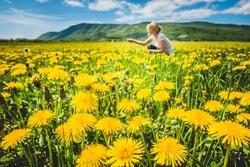 Blurred woman picking vivid yellow dandelion flowers on terrain under bright sunshine in summertime