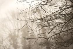 Blurred wooden branch background.