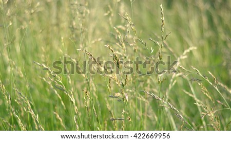 blurry grass background  #422669956