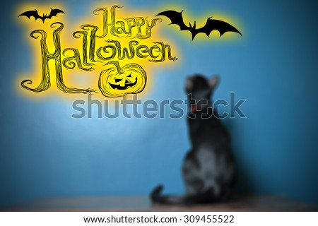 Blurry image of black cat on dark blue background with graphic wording \