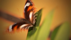 Blurry image of Papilio Demoleus butterfly, commonly known as Lime Swallowtail or Citrus Swallowtail, on the leaf. Blurry orange background