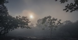Blurry panoramic silhouette of hazy atmosphere of the misty sparse forest with sun rising at Chaiyapoom, Thailand. Feel blue, calm, peaceful, lonely, strong, romance. Romantic atmosphere for lovers.
