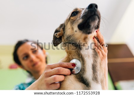 Blurry pose of a veterinarian woman doing a control to a dog's pulse using a stethoscope in a veterinary office. Focus on the stethoscope and dog.