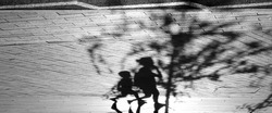 Blurry shadow silhouette of a boy and a woman walking under a young tree in pedestrian city zone in summer