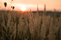 Blurry, soft picture of the sunset landscape with the view on the fields of grains.