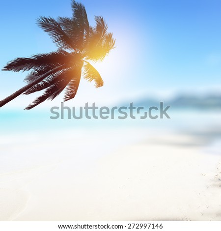 Blurry tropical beach background with palm tree and ocean.