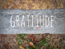 Blurry wood background with word - GRATITUDE