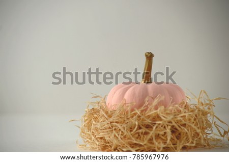 Blush pink pumpkins with gold stems on solid color background with copy space. Nontraditional fall, harvest and Thanksgiving theme.