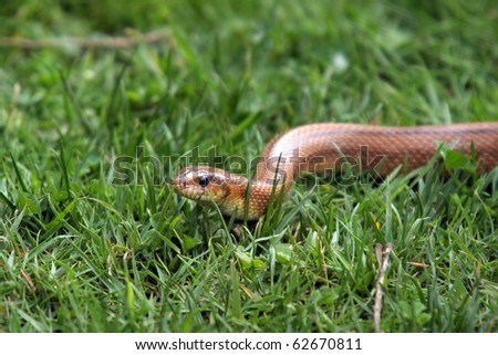 Boa Constrictor Snake, Nature Animal Photo - 62670811 :