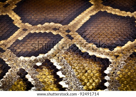 boa or python snake pattern skin from alive body in Thailand