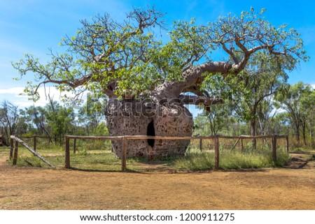 Boab Prison Tree near Derby in Western Australia. #1200911275