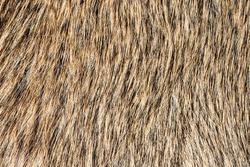 Boar fur texture. Animal skin background. Decorative hunters hut carpet. Hunting animals pattern.